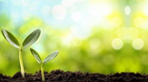 Applicazione Microrganismi in Agricoltura