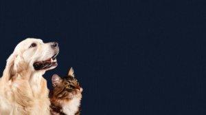 Uso Tecnologia EM per animali domestici