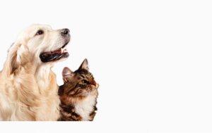 Prodotti naturali per animali