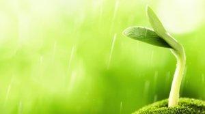 Tecnologia EM piante e giardinaggio