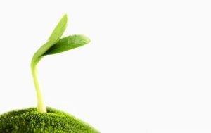 Uso Microrganismi Giardinaggio piante ORto
