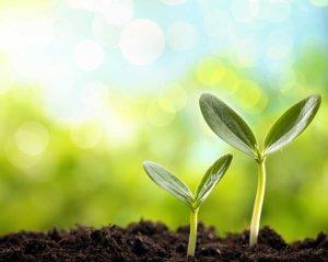 Microrganismi effettivi in agricoltura e viticoltura