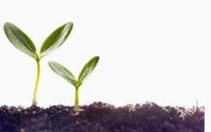 microrganismi effettivi in agricoltura