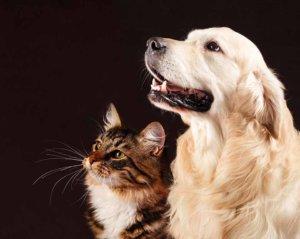 Uso Microrganismi per Animali Domestici