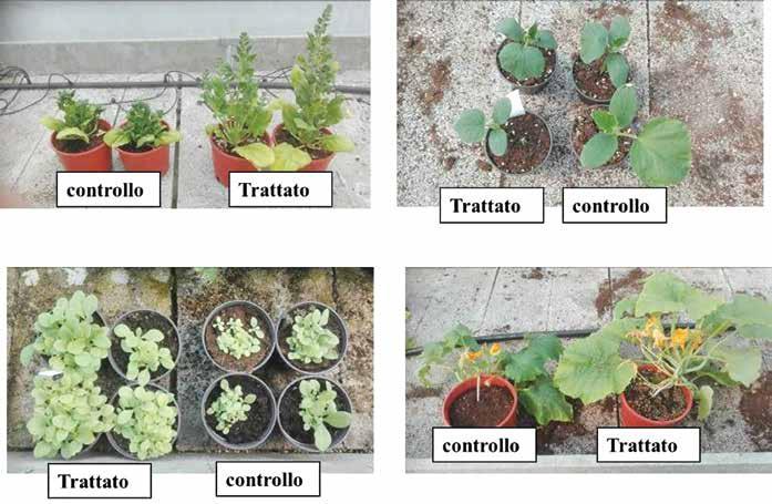 benefici produzione agricola con Microrganismi
