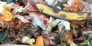 compostaggio e compost domestico