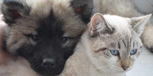 curare il pelo degli animali domestici