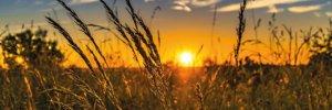 Perché scegliere agricoltura biologica