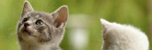 cura e integrazione piccoli animali
