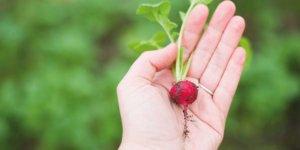 mondo ecosostenibile e sano