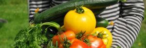Malattie delle piante in orto