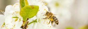 melassa per l'apicoltura