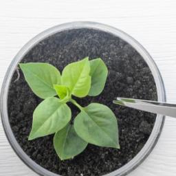 Articoli Scientifici Internazionali sui benefici dei Microrganismi Effettivi