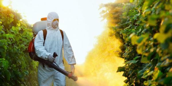 Uso-dei-Pesticidi-con-una-composizione-chimica-estremamente-dannosa