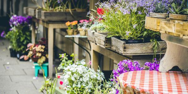 coltivare-in-vaso-piccolo-orto-fai-da-te