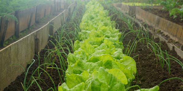 Proteggere-le-piante-da-erbe-infestanti