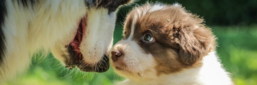 cura piccoli animali