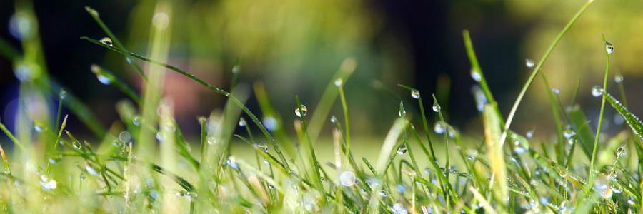 microrganismi nel suolo