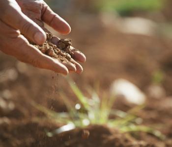 soil-migliorare-la-qualit-del-suolo