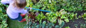 EMA Attivatore per giardino e suolo