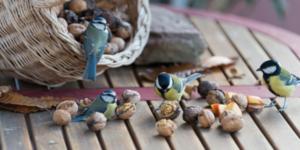 noci per alimentare gli uccellini d'inverno