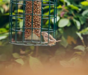 noci in giardino per gli uccellini